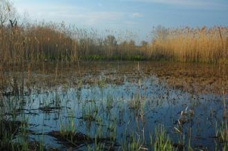 Zone humide de Morava (Rép. tchèque)