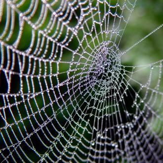 Toile d'araignée - © Josef F. Stuefer