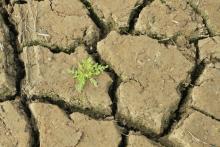Changement climatique - Aurélien Mathevon