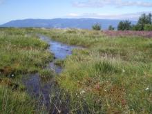 Zone humide de Montselgues - CEN Rhône-Alpes